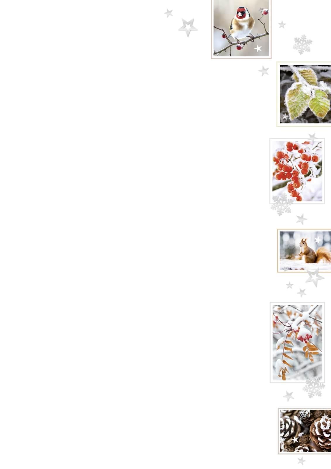 Weihnachtsbrief Avantgarde 1319210