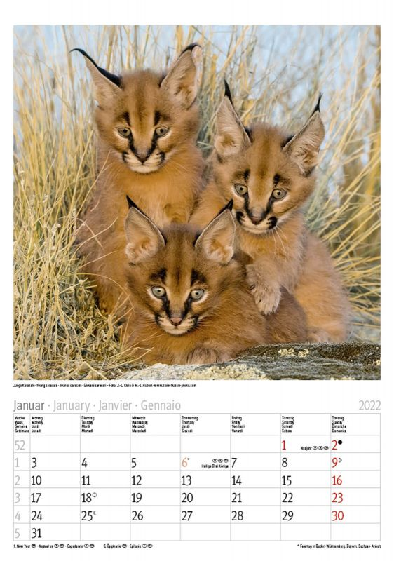 Kalender 2220222
